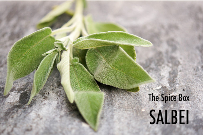 Sage – The Holy Herb