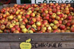 Cox Orange Pippin Apfelsorte im Alten Land Hamburg