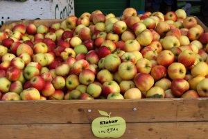 Elstar Apfelsorten im Alten Land Hamburg