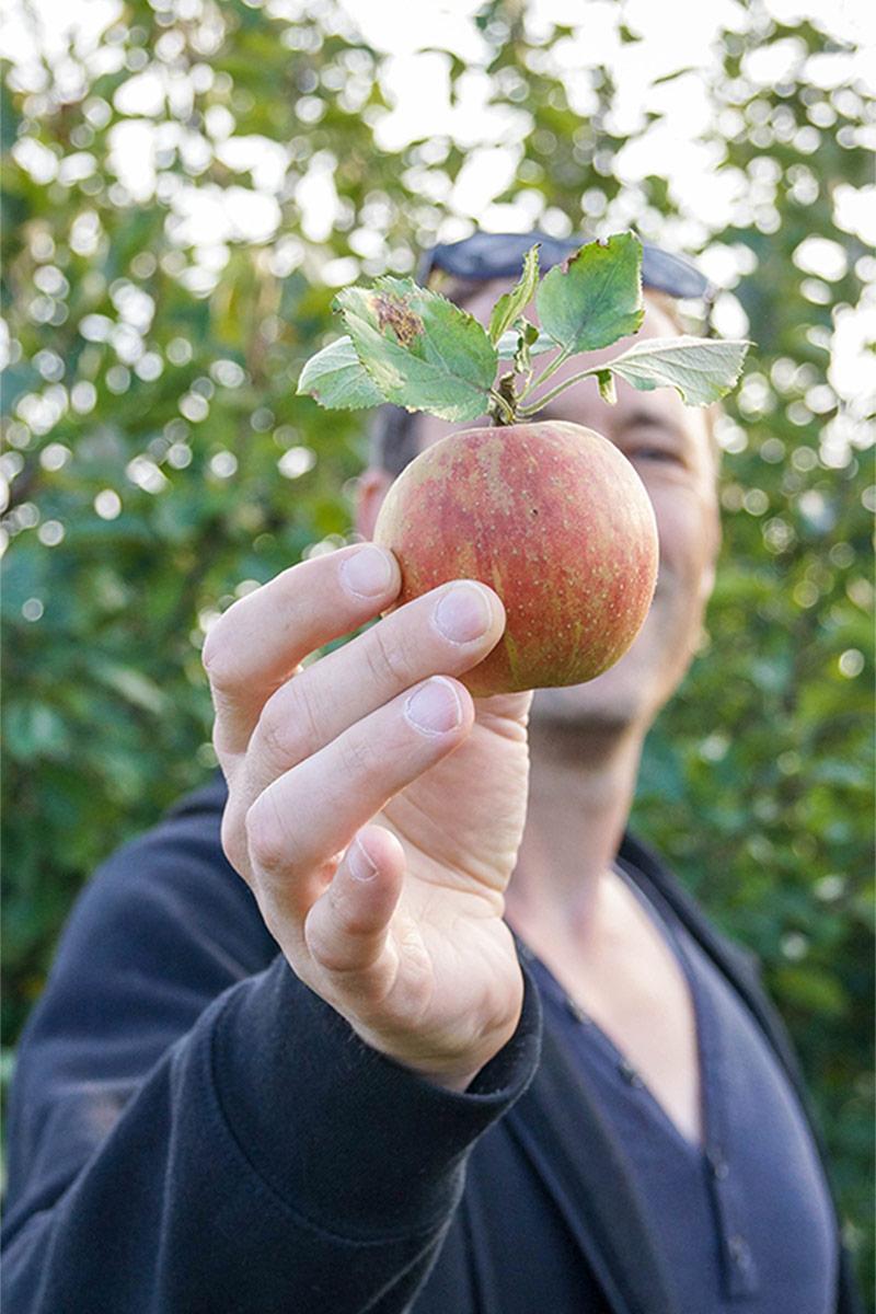 Apfelernte Altes Land Hamburg, Cox Elstar, Gala, Boskop, Abnehmen