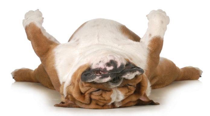 5 Gründe warum Schlaf gesund ist, Mittagsschlaf, Schlafen, Fittness