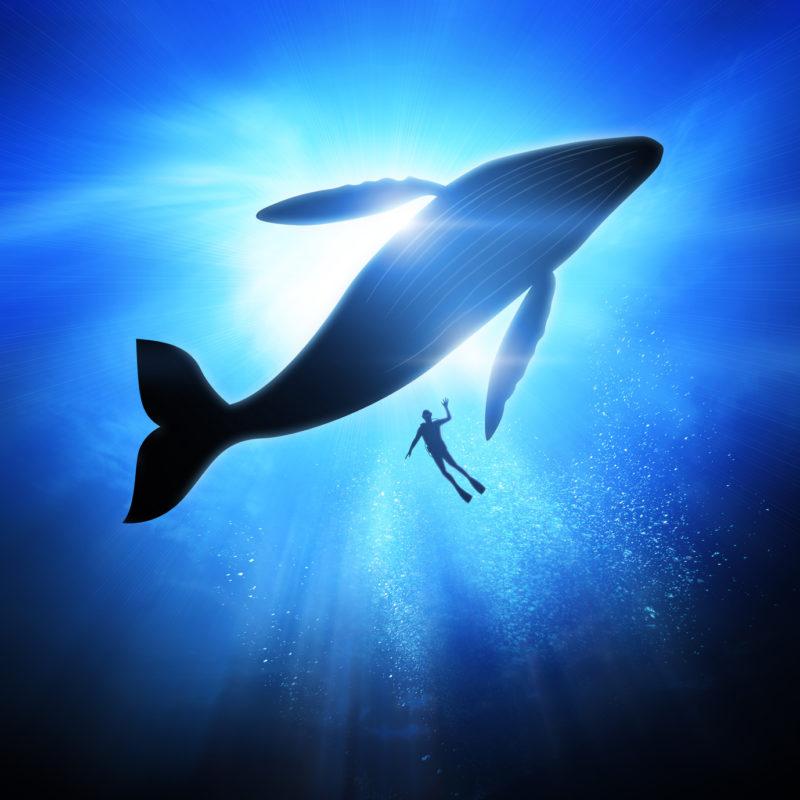 Was man mit 30 tun muss, um mit 50 weniger Probleme zu haben, Taucher mit Wal