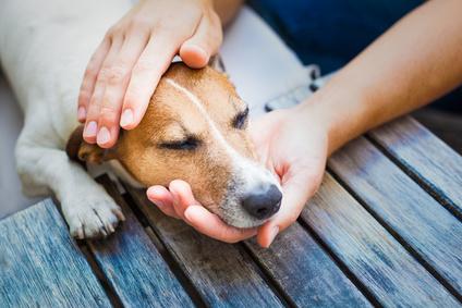 Hund bleibt ruhig während er gestreichelt wird