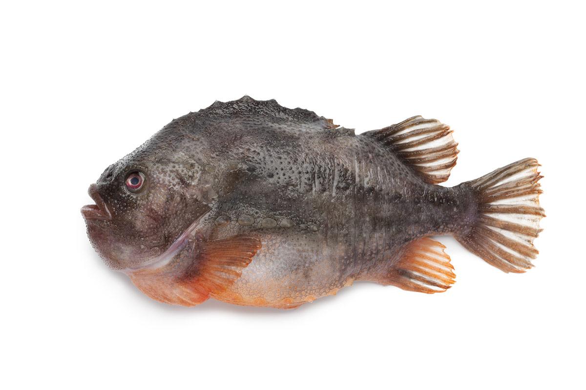 Seehase, Fisch, MSC Studie