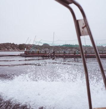 Lachsfarm in Norwegen, photo Tom Tautz