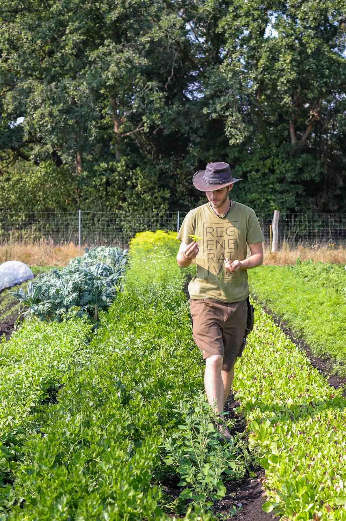 Dieser Biohof Hamburg entwickelt die Zukunft der Landwirtschaft