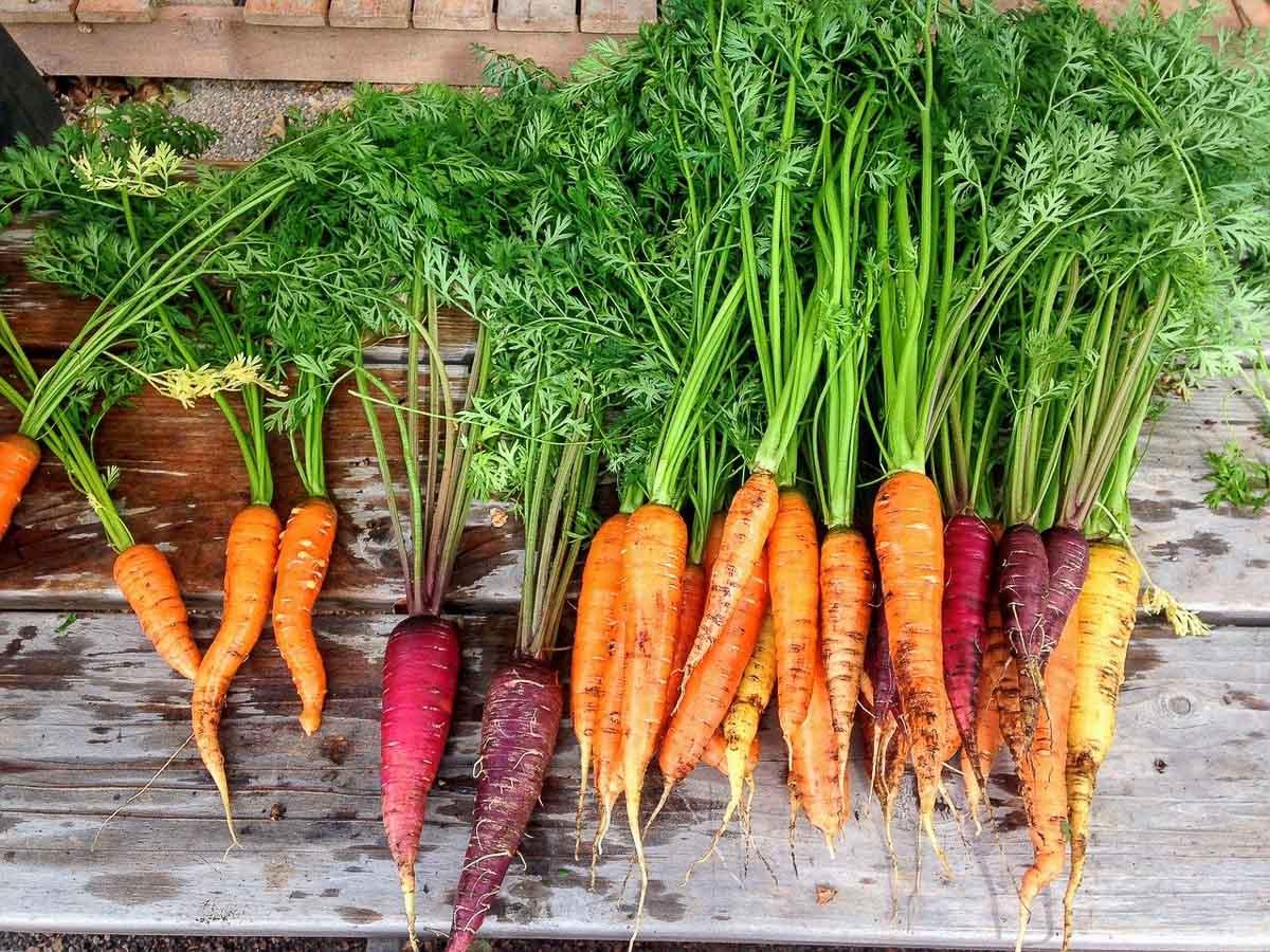 KAROTTEN. Farm-to-Fridge: Der nächste gesunde Food-Trend