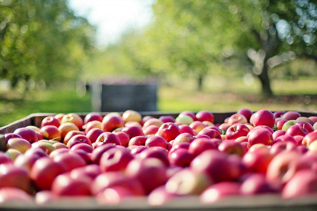 Apfel. Farm-to-Fridge: Der nächste gesunde Food-Trend