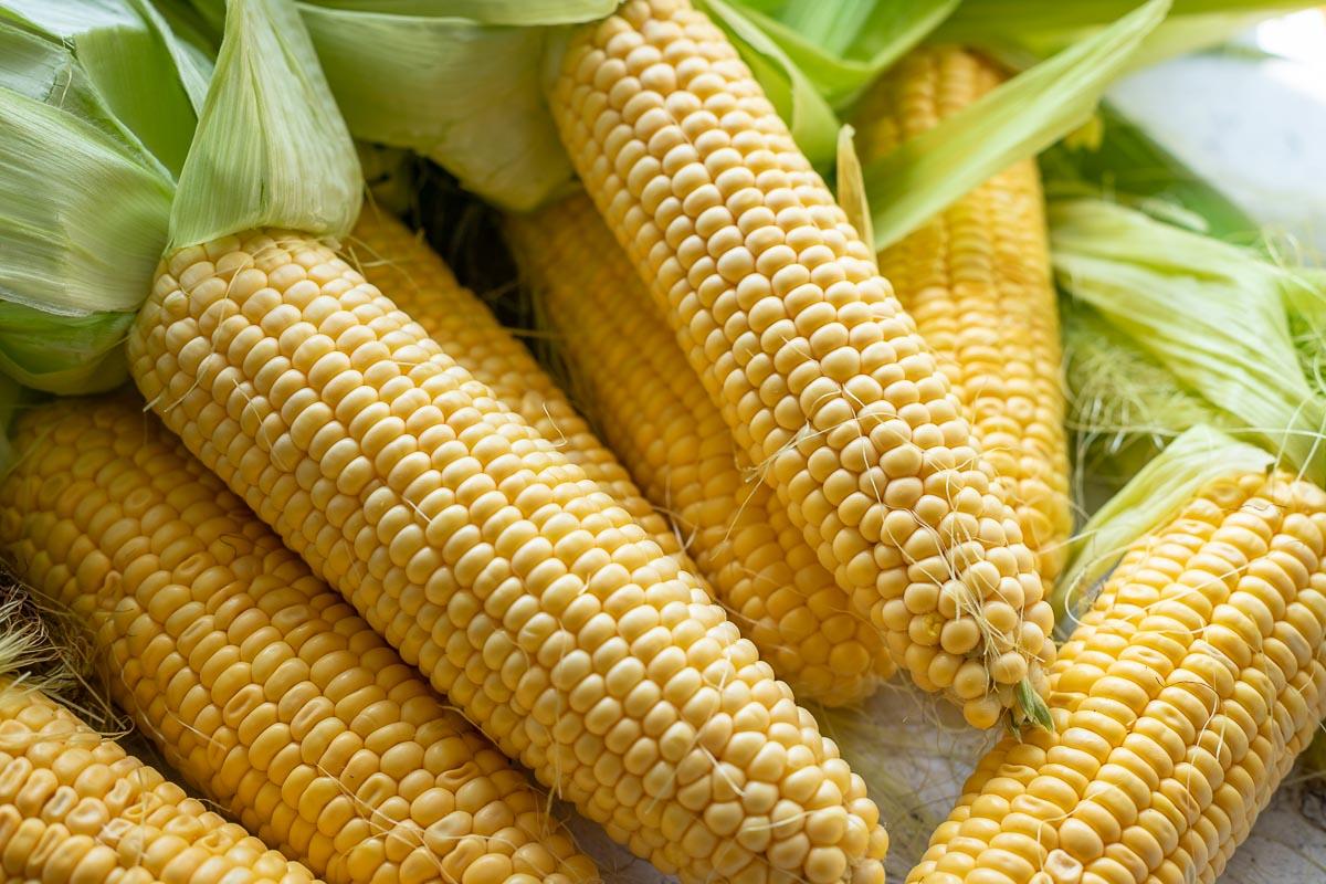 Frische Mais, Maiskorb